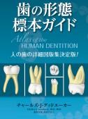 歯の形態 標本ガイド