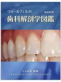 【上製・函付】ウォールフェルの歯科解剖学図鑑 最新第8版 ※本書籍をお求めの方は、直接弊社までご連絡下さい